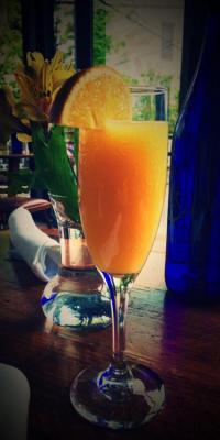 gaff mimosa